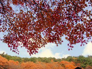 川沿いの紅葉.JPG