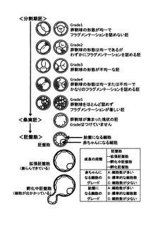 胚のグレード.jpg